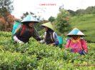 Daftar Tempat Wisata Di Ciwidey Bandung Call Admin 081323739973